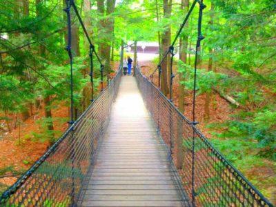 Muskoka Rope Bridge